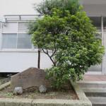 東京電機大学(photo11)